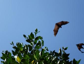 Vleermuissafari