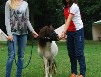 Mini paardjes